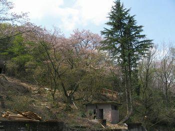 mt.onigiri1